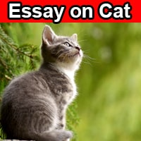 Essay on Cat in English