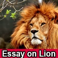 Essay on Lion