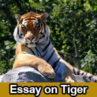 Essay on Tiger in English