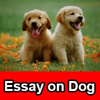 Essay on dog in English