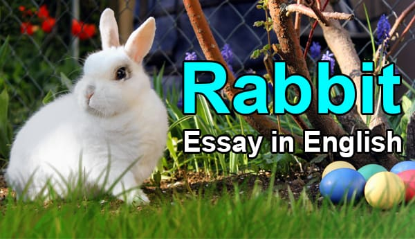Essay on Rabbit