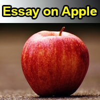 Essay on Apple in English