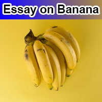 Essay on Banana in English