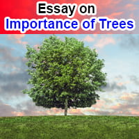 Essay on Importance of Trees in English