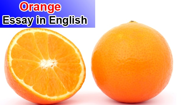 Essay on Orange