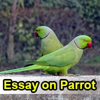 Essay on Parrot in English