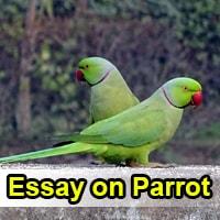 Descriptions essay topics