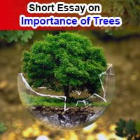 Short Essay on Importance of Trees in English